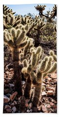Cholla Cacti Beach Sheet by Lawrence Burry