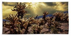 Beach Towel featuring the photograph Cholla Cactus Garden Bathed In Sunlight In Joshua Tree National Park by Randall Nyhof