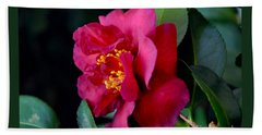 Beach Towel featuring the photograph Christmas Camellia by Marie Hicks
