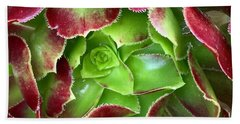 Christmas Succulent Beach Towel by Russell Keating