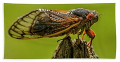 Cicada On Fence Post Beach Towel by Jim Moore