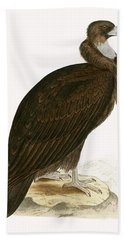 Cinereous Vulture Beach Towel by English School