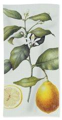 Citrus Lemon Beach Sheet by Margaret Ann Eden