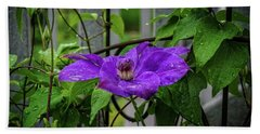Clematis In Purple Beach Sheet by Mary Timman