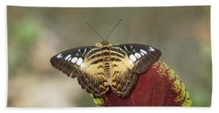 Beach Towel featuring the photograph Clipper Butterfly by Paul Gulliver