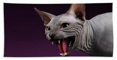 Close-up Aggressive Sphynx Cat Hisses On Purple Beach Towel