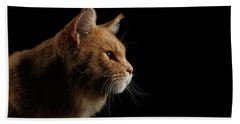 Beach Towel featuring the photograph Close-up Portrait Ginger Maine Coon Cat Isolated On Black Background by Sergey Taran