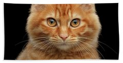 Beach Towel featuring the photograph Close-up Portrait Of Ginger Kitty On Black by Sergey Taran