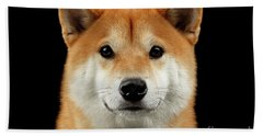 Close-up Portrait Of Head Shiba Inu Dog, Isolated Black Background Beach Towel