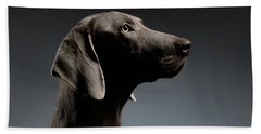 Beach Towel featuring the photograph Close-up Portrait Weimaraner Dog In Profile View On White Gradient by Sergey Taran
