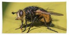 Close Up - Tachinid Fly - Nowickia Ferox Beach Towel