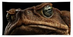 Closeup Cane Toad - Bufo Marinus, Giant Neotropical Or Marine Toad Isolated On Black Background Beach Towel