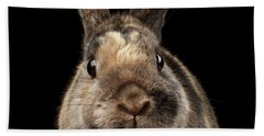 Closeup Funny Little Rabbit, Brown Fur, Isolated On Black Backgr Beach Towel
