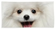 Closeup Furry Happiness White Pomeranian Spitz Dog Curious Smiling Beach Sheet by Sergey Taran
