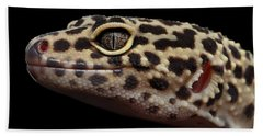 Closeup Head Of Leopard Gecko Eublepharis Macularius Isolated On Black Background Beach Towel by Sergey Taran