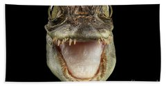 Closeup Head Of Young Cayman Crocodile , Reptile With Opened Mouth Isolated On Black Background, Fro Beach Sheet by Sergey Taran