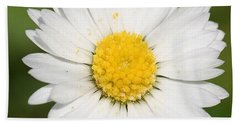 Closeup Of A Beautiful Yellow And White Daisy Flower Beach Sheet