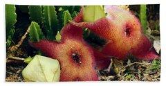 Closeup Of A Desert Starfish Beach Sheet