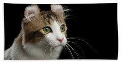 Closeup Portrait Of American Curl Cat On Black Isolated Background Beach Towel