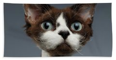 Closeup Portrait Of Devon-rex Looking In Camera On Gray  Beach Towel