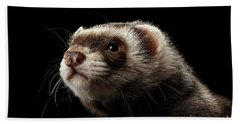 Closeup Portrait Of Funny Ferret Looking At The Camera Isolated On Black Background, Front View Beach Towel