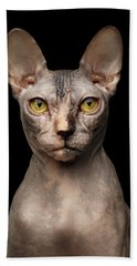 Closeup Portrait Of Grumpy Sphynx Cat, Front View, Black Isolate Beach Towel
