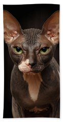 Closeup Portrait Of Grumpy Sphynx Cat Front View On Black  Beach Towel