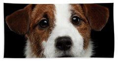 Closeup Portrait Of Jack Russell Terrier Dog On Black Beach Sheet by Sergey Taran