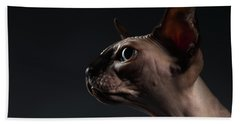 Beach Towel featuring the photograph Closeup Portrait Of Sphynx Cat In Profile View On Black  by Sergey Taran