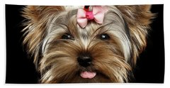 Beach Towel featuring the photograph Closeup Portrait Of Yorkshire Terrier Dog On Black Background by Sergey Taran