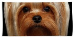 Closeup Portrait Yorkshire Terrier Dog On Black Beach Sheet by Sergey Taran