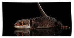 Beach Towel featuring the photograph Closeup Red-eyed Crocodile Skink, Tribolonotus Gracilis, Isolated On Black Background by Sergey Taran