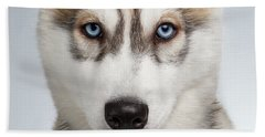 Closeup Siberian Husky Puppy With Blue Eyes On White  Beach Towel by Sergey Taran