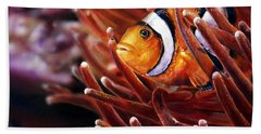 Clownfish Beach Sheet
