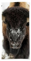 Cold Bison Stare Beach Sheet