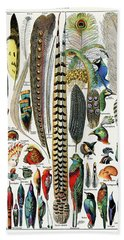 Collection Of Different Plume Types Beach Towel