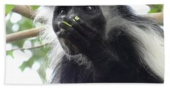 Colobus Monkey Eating Leaves In A Tree 2 Beach Towel