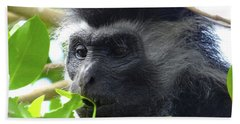 Colobus Monkey Eating Leaves In A Tree Close Up Beach Towel