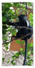 Colobus Monkey Eating Leaves In A Tree - Full Body Beach Towel