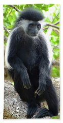 Colobus Monkey Sitting In A Tree 2 Beach Towel