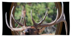 Beach Towel featuring the photograph Colorado Bull Elk by Shane Bechler
