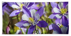 Colorado State Flower Blue Columbines Beach Towel by Teri Virbickis