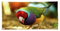 Colorful Bird Beach Sheet