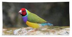 Colorful Lady Gulian Finch  Beach Towel by Penny Lisowski
