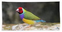 Beach Sheet featuring the photograph Colorful Lady Gulian Finch  by Penny Lisowski