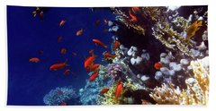 Colorful Lyretail Anthias Beach Sheet