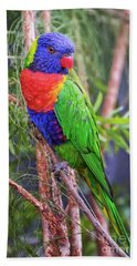 Colorful Parakeet Beach Towel by Stephanie Hayes