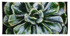 Colorful Succulent Beach Towel by Sandra Estes