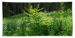Colors Of A Forest In Vogelsberg Beach Towel