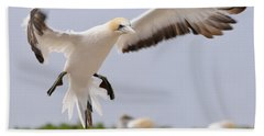Coming In To Land Beach Towel